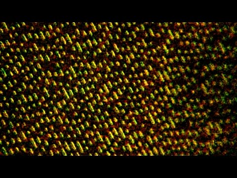 CD-ROM Under the Microscope HD [2000x]