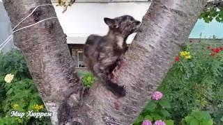 Шурик и Лида, лаванда, коты-собаки - жаркий летний микс Краснодара :)