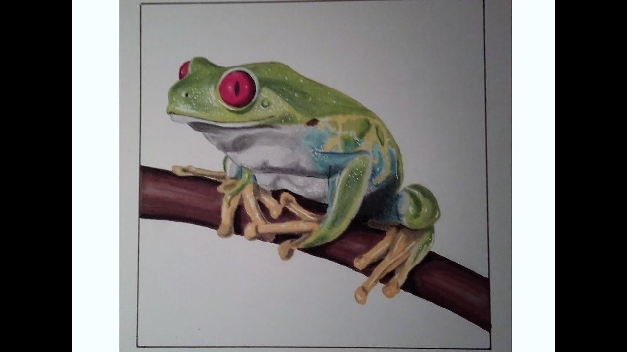 Tutoriel comment dessiner une grenouille r aliste speed - Dessiner une grenouille ...