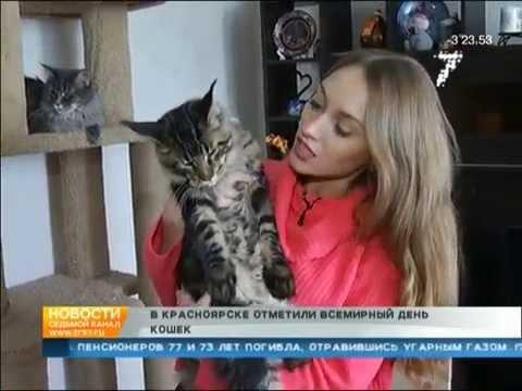 Продажа котят мейн-кун из питомника. - YouTube