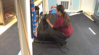 How To Train Your Puppy To Run Treadmill Meet Blaze Positive Training