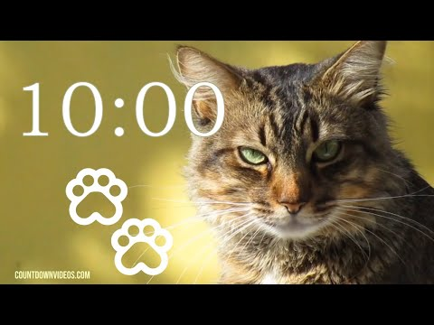 Cat Timer 10 Minutes ? Relax Music Perfect For Classrooms, Study & Homework