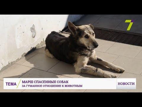 Новости 7 канал Одесса: Марш спасенных собак: за гуманное отношение к животным