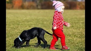 MYTH: Dogs are as smart as 2 year old kids DEBUNKED