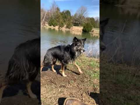 My dog in slow mo