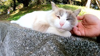 ラグドールみたいな猫をモフると、体を伸ばしてリラックスしてくれた