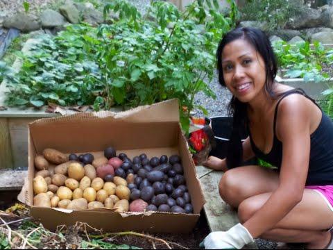 Summer 2014 Pacific Northwest Garden Mom   YouTube