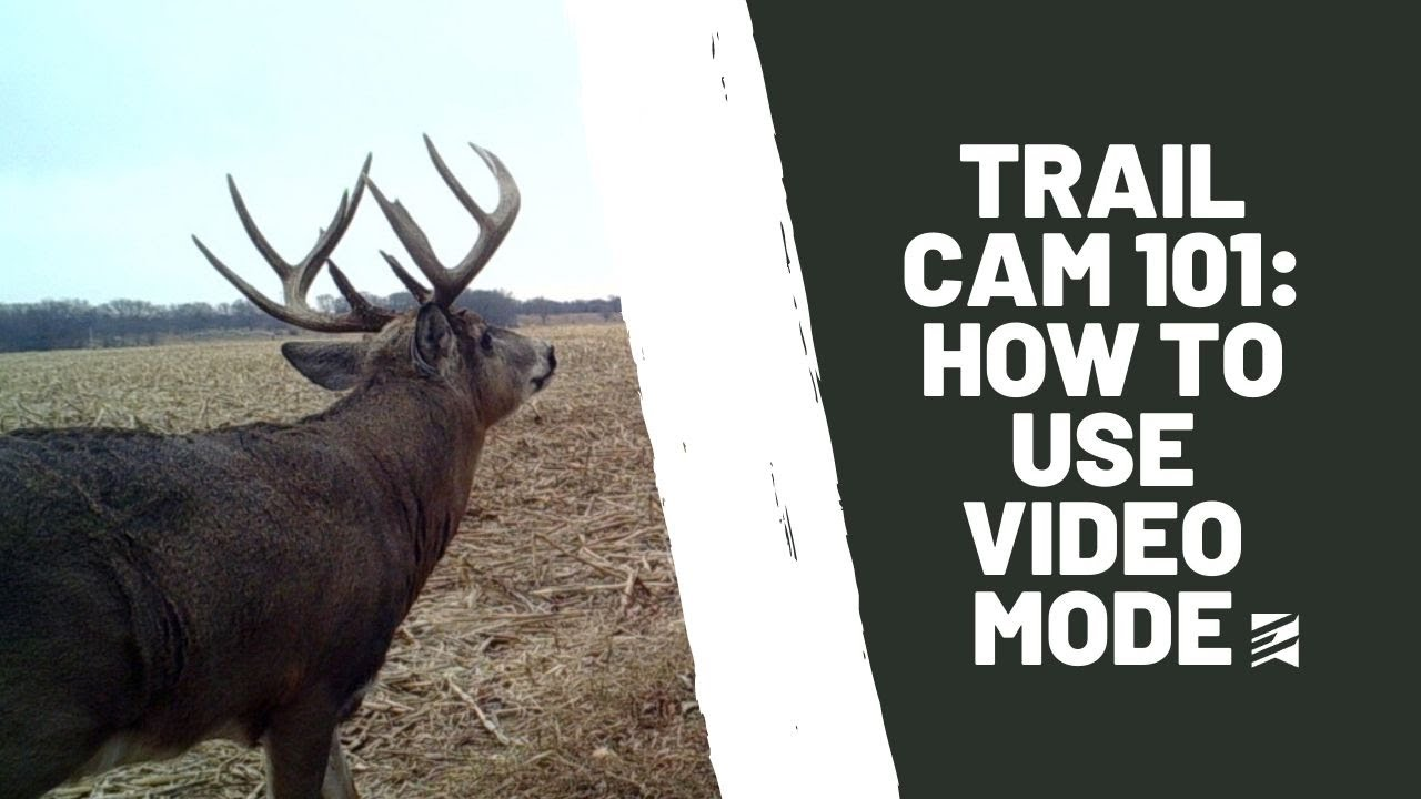 Trail Cam 101: Running Trail Cameras in Video Mode