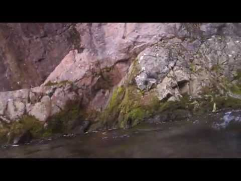 SCUBA Diving : Freshwater Fishes