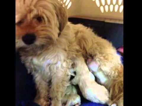 Mama And Pups, TheDog Rescuers & Shelter Hope Pet Shop