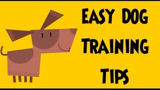 Easy Dog Training Tips