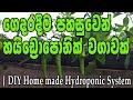 කුඩා හයිඩ්රපොනික් වගාවක් ගෙදරදීම   DIY Hydroponic system #hydroponics #soillessfarming