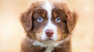 Чарующие фотографии собак