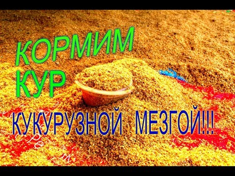 Линька у кур Сера кормовая - YouTube