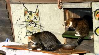 В гостях очень голодный соседский кот Серый ПАПА!