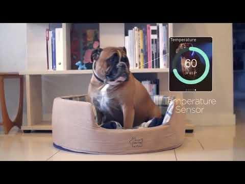 Collar inteligente para perros