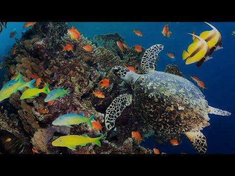 Das Leben zwischen den Korallenriffen Doku