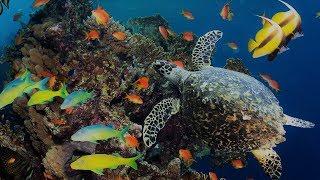 Das Leben zwischen den Korallenriffen [Doku]