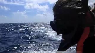 Celebrating life via culture, adventure, whale sharks, zip lines, M...