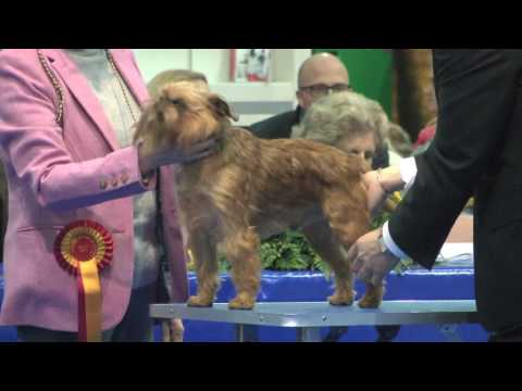 Manchester Dog show 2017 - Toy group FULL