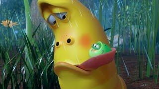 LARVA | Un acaro | Film dei cartoni animati | Cartoni per bambini | WildBrain