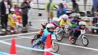 2017.1.8 3歳 予選 ランニングバイク選手権 in 姫路セントラルパーク