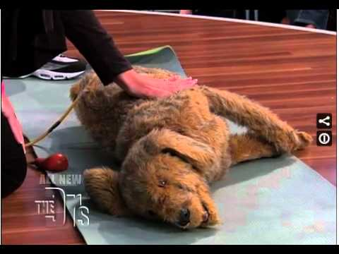 Pet CPR Keep your furry friends safe by learning pet CPR.