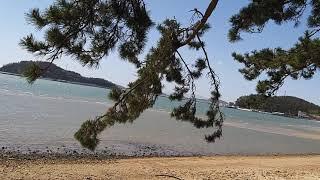 #송호리해수욕장
