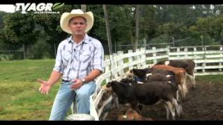 Tv Agro Guatemala - Raza Senepol
