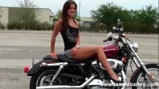 Used 2005 Harley-Davidson XL1200C Sportster 1200 Custom for Sale