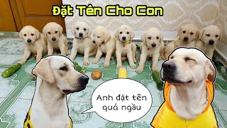 Ngày 41 | Chút Chít Đã Có Tên - Màn Đặt Tên Có 102 Của Củ Cải Kim Chi | My Dogs Name Their Puppies