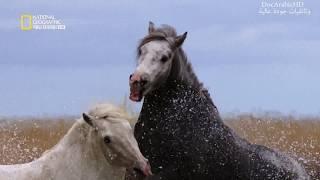 وثائقي جودة عالية HD | عالم صراعات الحيوانات البرية الوحشي و المخيف