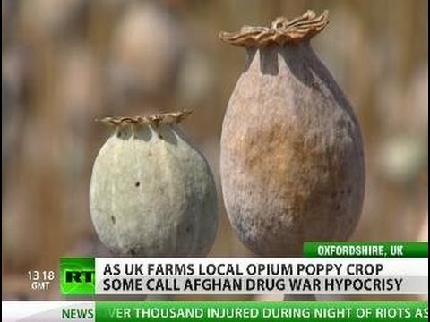 Harvest of Hypocrisy? UK opium poppy farming kept hush-hush