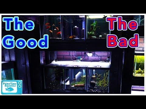 10 Gallon Fish Tank Pros And Cons: Are They Worth It?