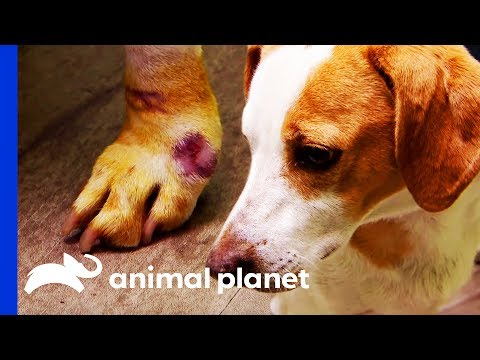 Sores On Dog's Legs Need Treatment So He Can Be Adopted | Dr. Jeff: Rocky Mountain Vet