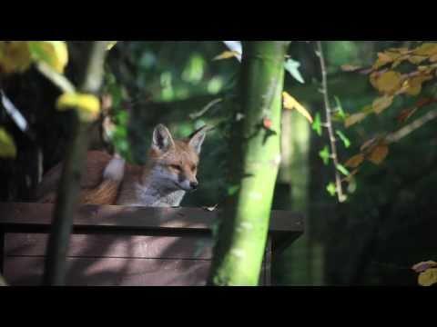New Forest Wildlife Park [Documentary]