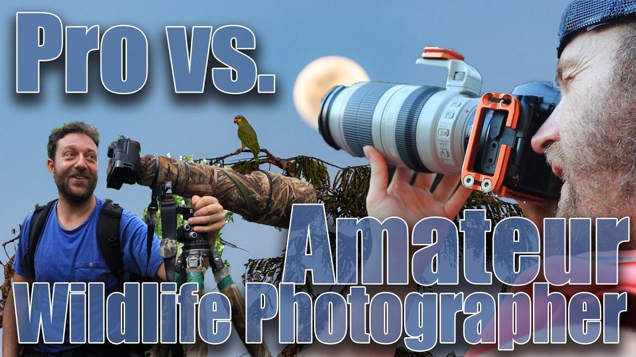 Amateur Photos amateur vs. professional wildlife photographer