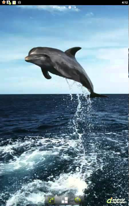 Dolphins hd live wallpapers quick demo youtube dolphins hd live wallpapers quick demo voltagebd Gallery