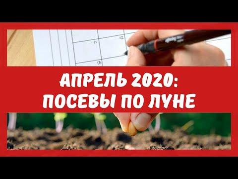 Лунный посевной календарь на апрель 2020: когда сеять семена, пикировать, опрыскивать деревья