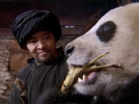 Wild China: Pandas - Living With Giants   Panda Documentary   Natural History