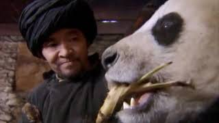 Wild China: Pandas - Living With Giants | Panda Documentary | Natural History