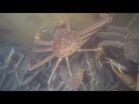 Kodiak Tanner Crabbing 2018