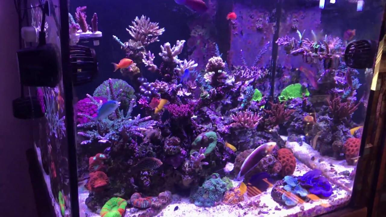 3 month update SPS Reef under Radion G4 pros