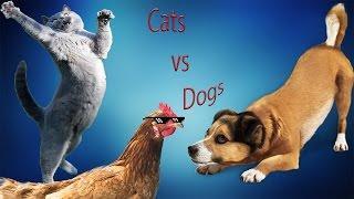 Funny video cats vs dogs смешное видео коты против собак №17