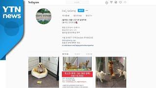 [서울] 서울시, 도심 유기동물 입양카페 시범 운영 /…