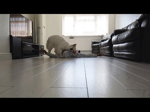 fainting-in-front-of-my-dog.-he-goes-crazy!
