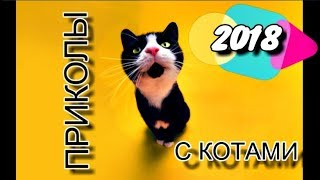 Приколы с Котами - Смешные коты и кошки 2018 II Смешное Видео