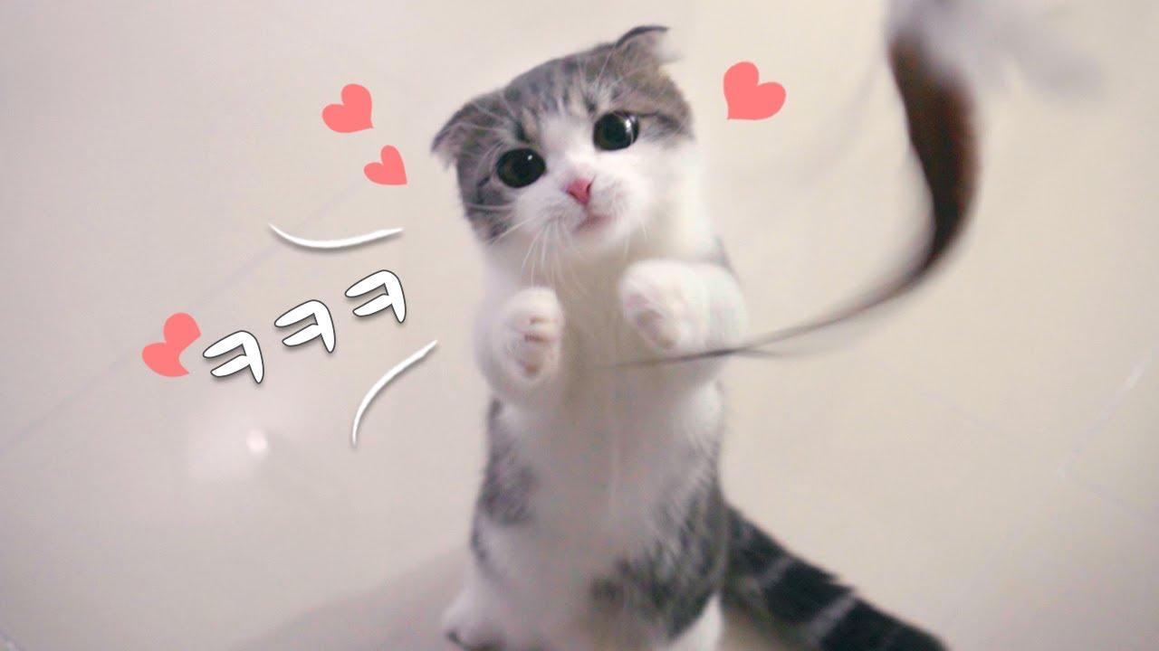 귀여운 고양이 슬로우로 보면 귀여움 두배