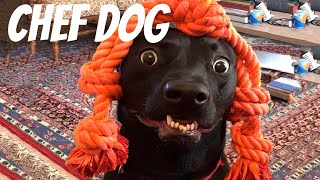 👍 Best Funny Dogs 🐶 And Cats 😹  Try Not To Laugh Challenge 2020