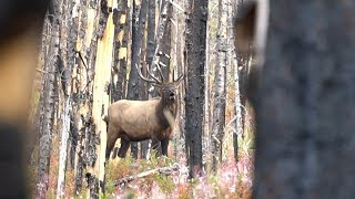 ROLLER COASTER ROCKY MOUNTAIN ELK HUNT - EP 19 - LAND OF THE FREE